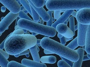 Bạn có muốn biết vi khuẩn lao chết ở nhiệt độ nào hay không ?