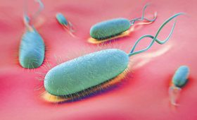 [Hỏi gì – Đáp ngay]: Thời gian điều trị vi khuẩn HP bao lâu?